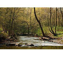 Gaja Creek Photographic Print