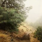 Diablo Morning Fog  by Ellen Cotton