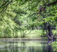 Reflective Pond by Ginger  Barritt
