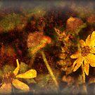 Nature Photography of Ginger Barritt by Ginger  Barritt