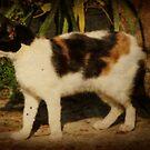 Barn Cat by Ginger  Barritt