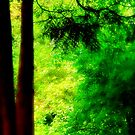 Trees and light by Thomas Tolkien