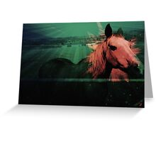 horse play Greeting Card