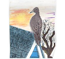 Mourning Dove on a Rooftop Poster