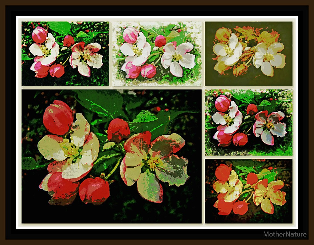 Apple Blossom Time by MotherNature