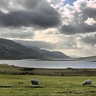60N... Heading Home from Scalloway by Larry Lingard-Davis