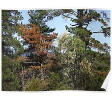 Rustic colours in trees Poster
