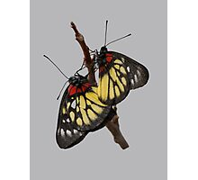 Two butterflies on branch Photographic Print