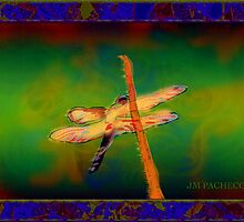 DRAGON FLY by Jose M  Pacheco