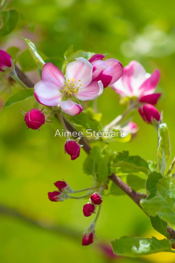 Apple Blossom by Aimee Stewart