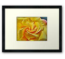 Pimp My Rose  Framed Print
