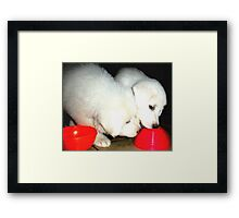 Play Time! Framed Print