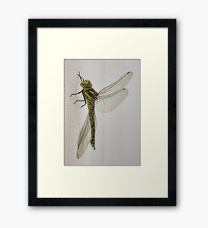 Dragon Fly Framed Print
