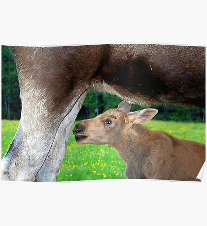 Baby Moose - Searching for Milk Poster