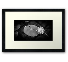 Monochrome Water Lily (Nymphaeaceae) Framed Print