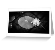 Monochrome Water Lily (Nymphaeaceae) Greeting Card