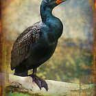 Finer Feathered Friends: Double Crested Cormorant by alan shapiro