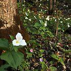 Wild Trillium Garden by Lynn Gedeon