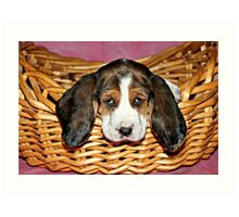 Bassethound Puppy in a Basket Art Print
