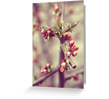 Pink Blossom Nature Photography Greeting Card