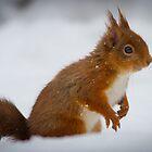 Squirrel by moonunit