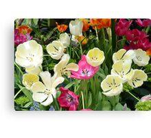 Open Tulips Canvas Print