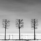 Five trees by JuliaPaa