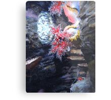 The Coral and the Shrimp Metal Print