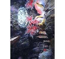 The Coral and the Shrimp Photographic Print