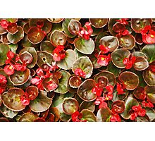 Flowers and Leaves Photographic Print