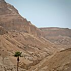 Lonely Dead Sea Tree by Michael Redbourn