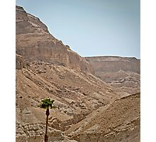 Lonely Dead Sea Tree Photographic Print