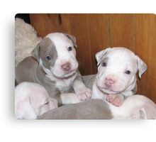 New Pups On The Block Canvas Print