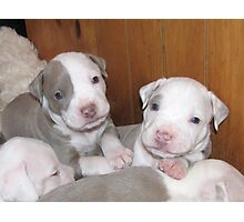 New Pups On The Block Photographic Print