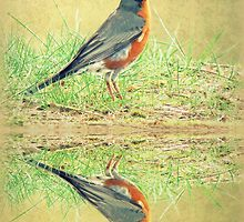 American Robin At Water's Edge by Jean Gregory  Evans