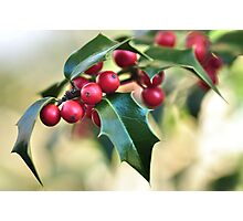 Holly Holy  Photographic Print