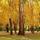 Autumn Foliage Splendor - NZ by AndreaEL