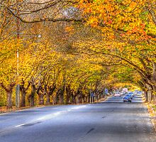 Hahndorf Autumn, Adelaide Hills, SA by Mark Richards