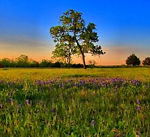 Bluebonnet Fields in Texas by aprilann