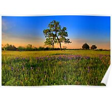 Bluebonnet Fields in Texas Poster