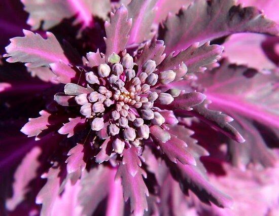 Kale Close-up by WildestArt