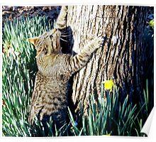 The Tree hugger Poster