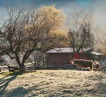 Morning Farmyard 1  by Tracy Riddell