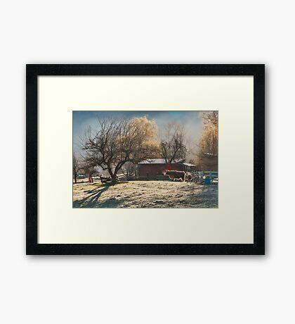 Morning Farmyard 1  Framed Print