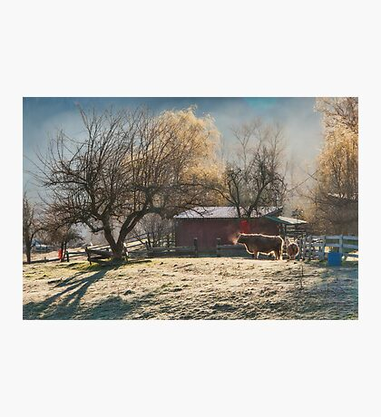 Morning Farmyard 1  Photographic Print