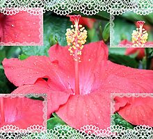 Hibiscus Collage by aprilann