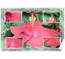 Hibiscus Collage Poster