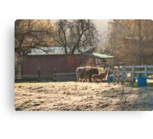 Morning Farmyard 2 Canvas Print