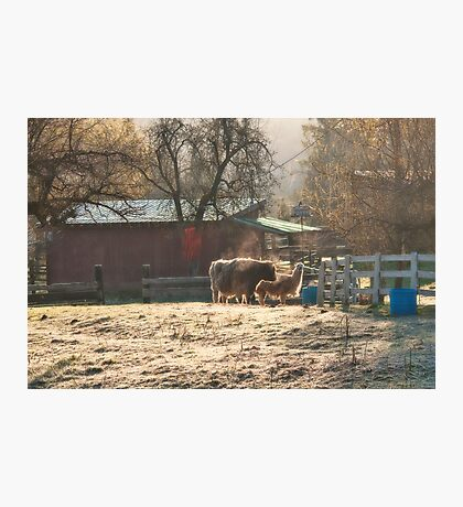 Morning Farmyard 2 Photographic Print