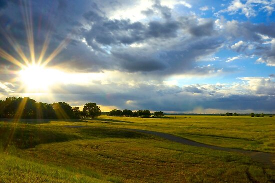 Fields of Light by Barbara  Brown